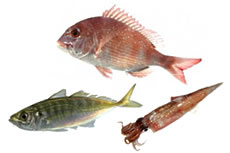 お魚のさばき方