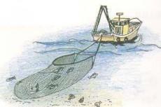 三重県津市にある「みえぎょれん」のサイトです。「みえぎょれん」や三重の海の紹介、お魚を使った料理レシピも掲載してます。  船曳網(ばっち網)三重県の漁業