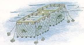 魚類養殖業