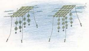 かき・真珠養殖業