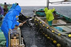 漁業の状況