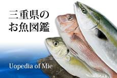 三重県のお魚図鑑