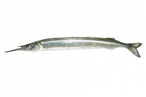 サヨリ/針魚