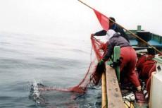 三重県 浜の声:伊勢えび刺し網漁業