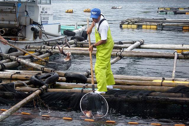 三重県 浜の声:魚類養殖漁業