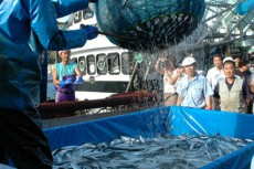 三重県 浜の声:さんま棒受網漁業