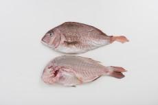 鯛:ハーフカット