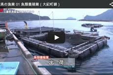 三重県の漁業 01 魚類養殖業(大紀町錦)【動画】
