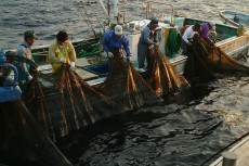 三重県 浜の声:大型定置網漁業
