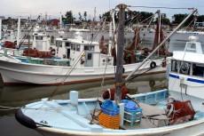 三重県 浜の声:小型底曳網漁業