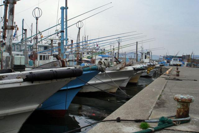 三重県 浜の声:一本釣漁業